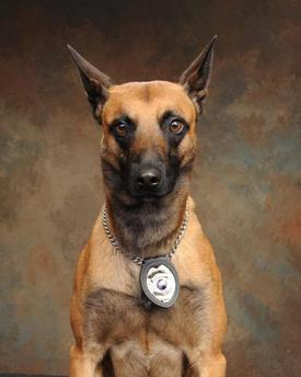 K-9 Nick / Officer Fox's partner who was also injured in the shooting, Nick is expected to recover.